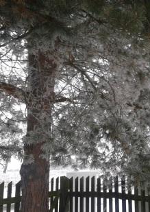 zima-zag-2017